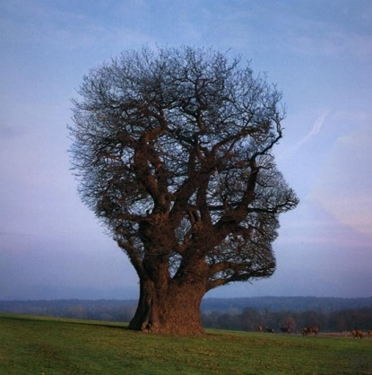 Tree_of_half_life